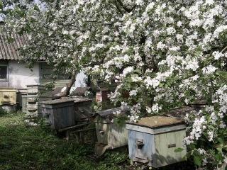Пасека пчел в Волгограде