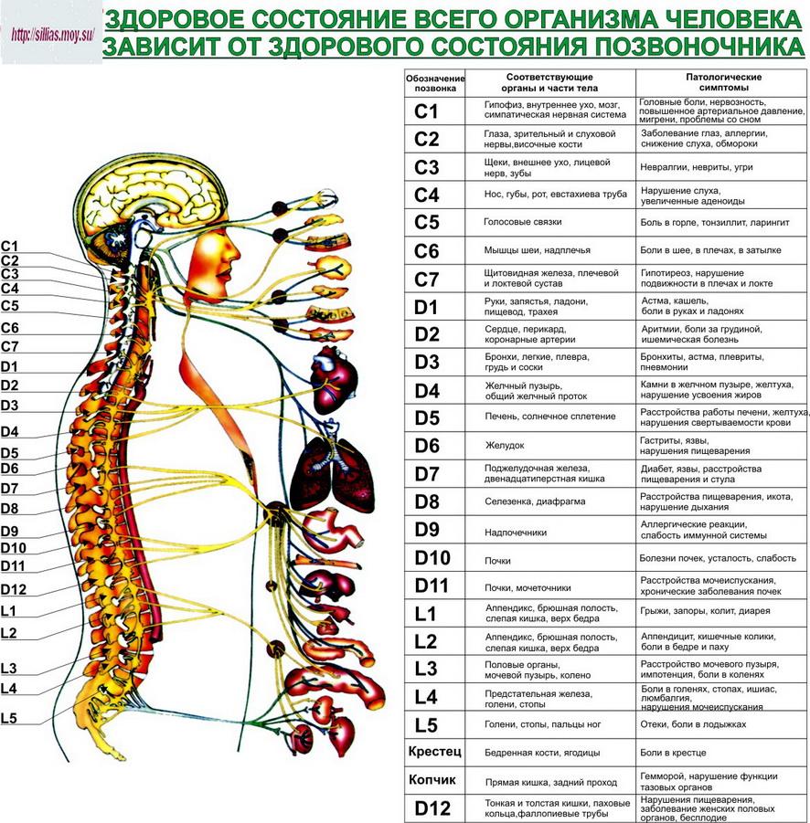 Дифференциальный диагноз диарей 25 фотография