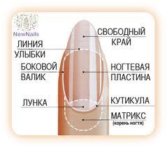 Ногтевая диагностика в Аюрведе - линии, форма, цвет, лунка